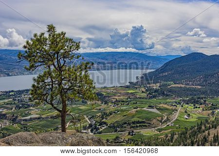 Orchards and Okanagan Lake from Giants Head Mountain near Summerland British Columbia Canada witha Ponderosa Pine tree
