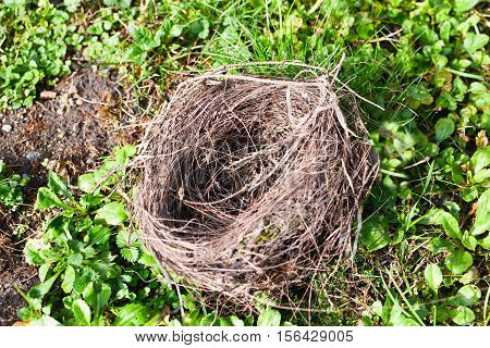 bird nest in the meadow birds fly away
