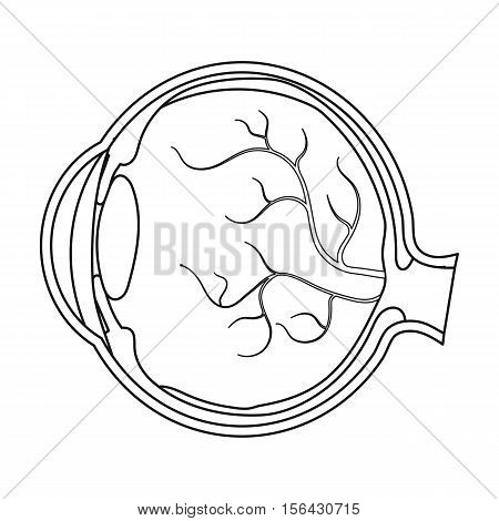Eyeball icon in outline style isolated on white background. Organs symbol vector illustration.