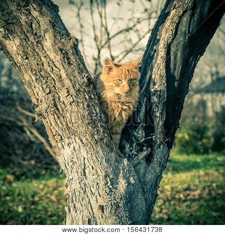 Red domestic tomcat on the tree at fall