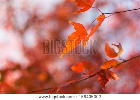 leaves, colors, autumn, nature, tree, red, beauty, backgrounds, yellow, season, vibrant, orange, image, in, sunlight, colored, bright, plant, green, foliagu00e9, space, multi, maple, forest, copy, october, design, outdoors, scenics, defocused, light, bran