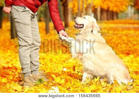 Man training his dog in beautiful autumn park