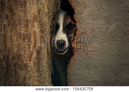 Sad dog hiding in kennel, close up view