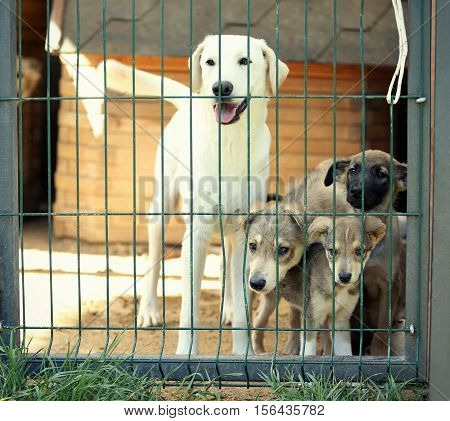 Homeless dogs in animal shelter cage