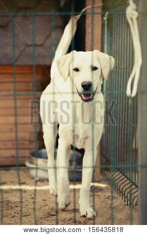 White homeless dog in animal shelter cage