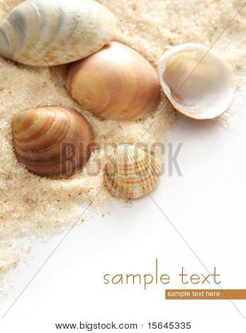 shells and easy to remove the text