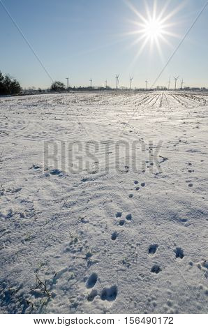 Winter landscape with animal spoor, sun and wind turbines in Nordfriesland, Germany.