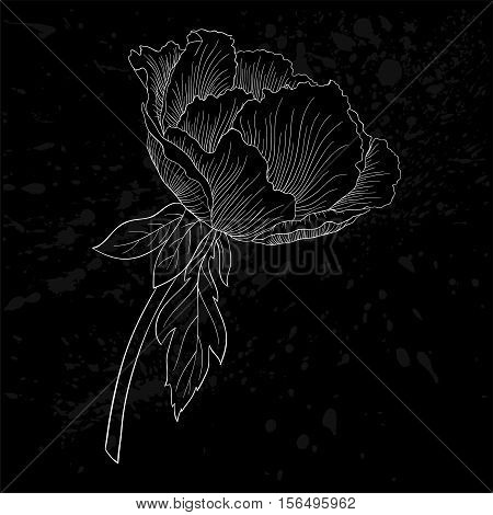 beautiful monochrome black and white Plant Paeonia arborea (Tree peony) flower isolated. for greeting cards and invitations of wedding birthday mother's day and other seasonal holiday