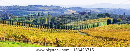 Traditional scenery of Tuscany .beautiful Chianti - vine region , Italy