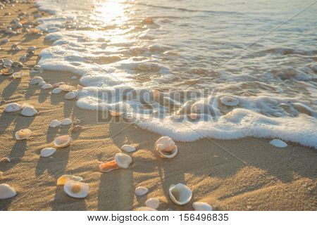 Seashell on the beach in sunshine