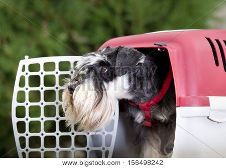 Dog In Plastic Carrier