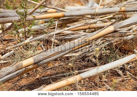 The texture of the dry reeds. A fence made of reeds. Background. Tree. Dry grass. Cane.