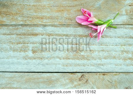 Hibiscus Flower Or Hibiscus Rosa Sinensis Flower With Blank Text Copy Space Isolated On Wood Backgro