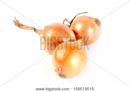seasonal harvest of fresh ripe onion healthy food