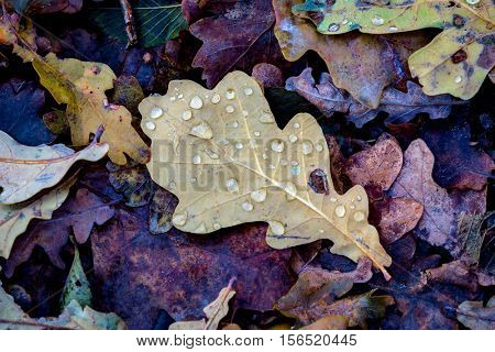 wet autumn leafage - abstract natural background