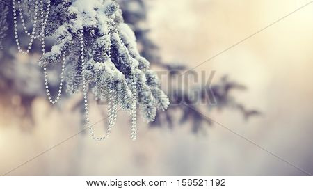 Snow-covered fir-tree branch in snow with Christmas-tree decoration