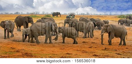 Herd of elephnats on the open plains in Hwange with a tourist truck in the distance on a game drive