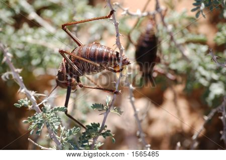 Insect On A Bush