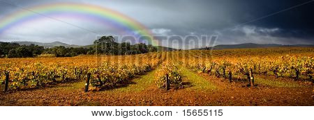 Dark storm clouds loom over vineyard with a rainbow in the background