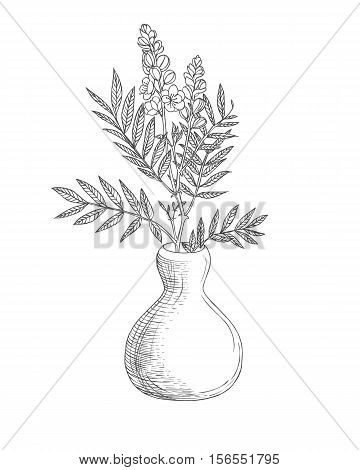 Vase With Senna Flowers. Linear Illustration