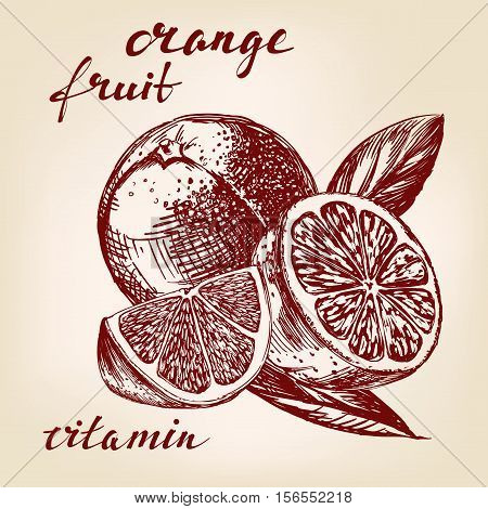 fruit orange set hand drawn vector llustration realistic sketch