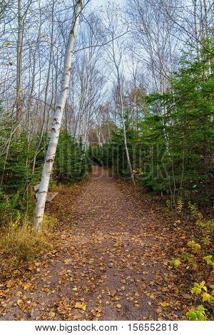 Forest path through rural Prince Edward Island, Canada.