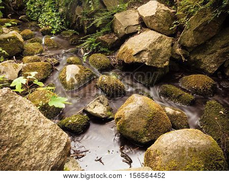 stones in woods forest outdoor. stream in gdansk danzig polish city oliva park poland. Nature.