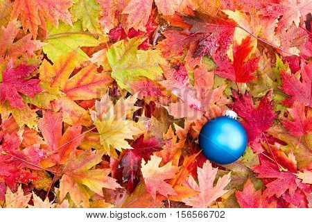 High Angle Full Frame Still Life View of Satin Finish Blue Christmas Ball Decoration on Bed of Fallen Colorful Autumn Leaves from Deciduous Trees