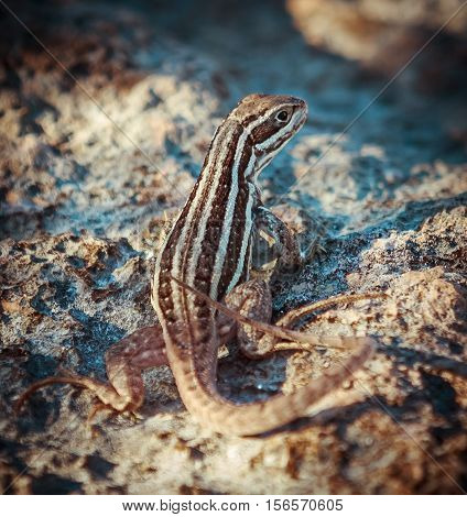 beautiful amazing closeup view of a little reptile sitting on the rocks