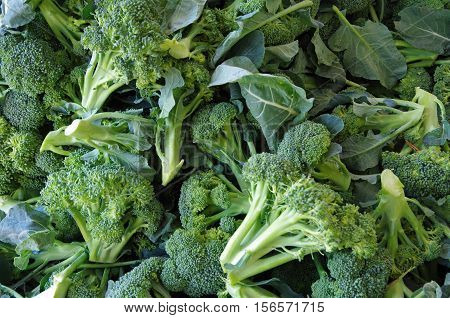 Mounds of fresh cut broccoli heads and stems