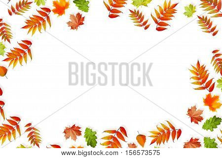 Foliage isolated on white background. Golden autumn. Composition.