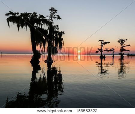 The sun rising among cypress trees in the water