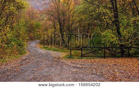 Forest Path In Orange Foliage