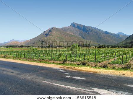 Grape Farm, Western Cape, South Africa 12hfe