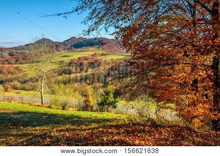 Autumn Mounrain Landscape With Meadow And Trees On Hillside