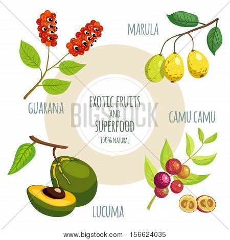 Vector Icon Set With Exotic Fruits And Superfood: Guarana, Marula, Lucuma And Camu Camu. Organic Veg
