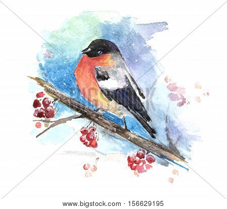 Bullfinch on a branch, watercolor. Christmas card