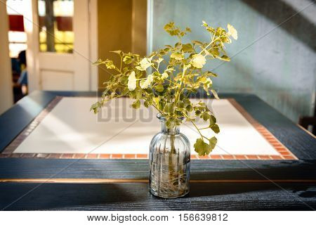 Plant in bottle on the table within natural light make feel sad and lonely.
