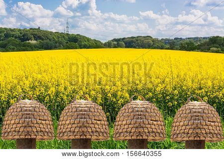 Five old beehives of straw in front of a blooming rape field with beautiful blue sky in the background.