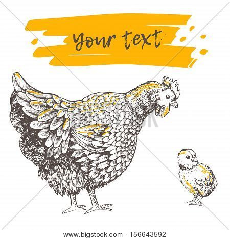 Illustration little chicken and hen. Series of farm animals. Graphics sketch hand drawing birds family. Brood-hen teaches chick. Vintage engraving style. Family day