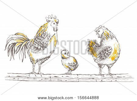 Illustration - sketch rooster chick and broody. Series of farm animals. Graphics handmade drawing chicken and hen. Vintage engraving style. Isolated chicken birds are sitting on a tree branch poster
