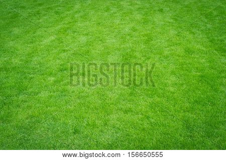 Lawn green home, green grass for background.