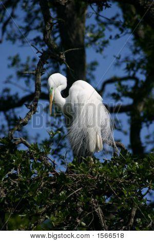 Whtie Bird Bent Neck