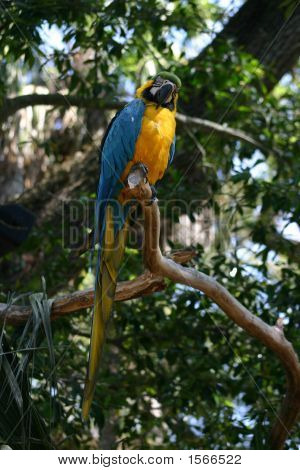 Blue Parrot In The Trees
