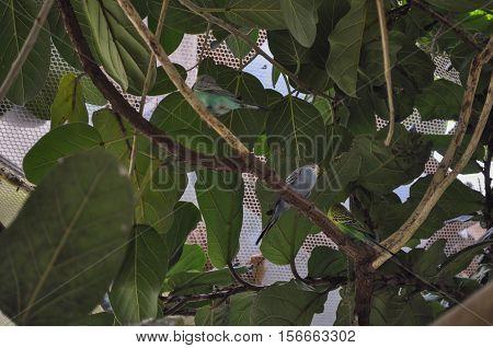 Nightingale Bird Animal