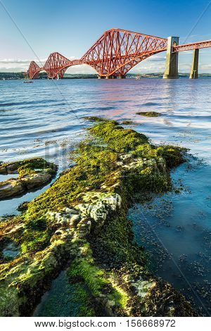 The Forth Road Bridge and seaweed in Scotland
