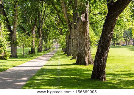 Tree alley with old trees on university campus. poster