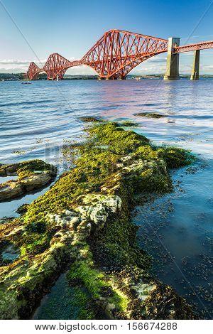Close Up Seaweed And Forth Road Bridge