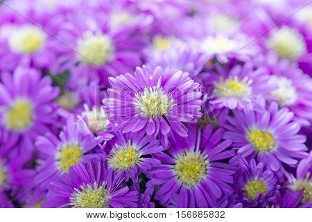 valentine blue flowers background. nature blue flower.