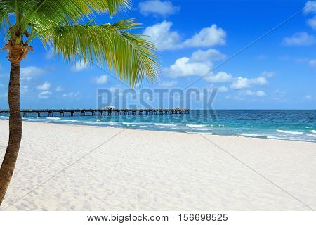 Tropical beach with palm tree and pier on a sunny day